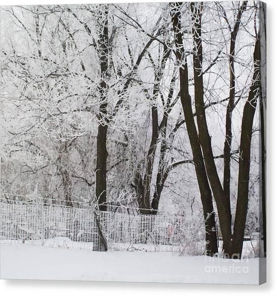 Ice Anyone Canvas Print