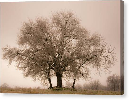 Ice Covered Tree Canvas Print