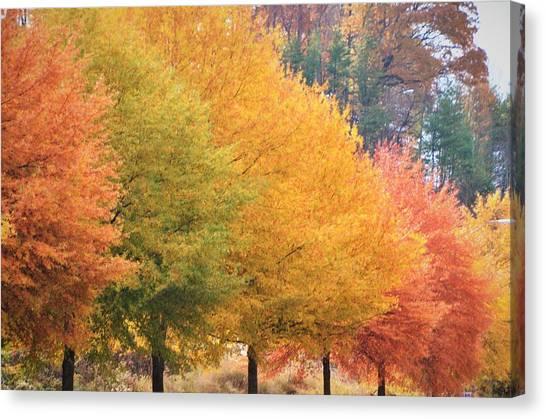 October Trees Canvas Print