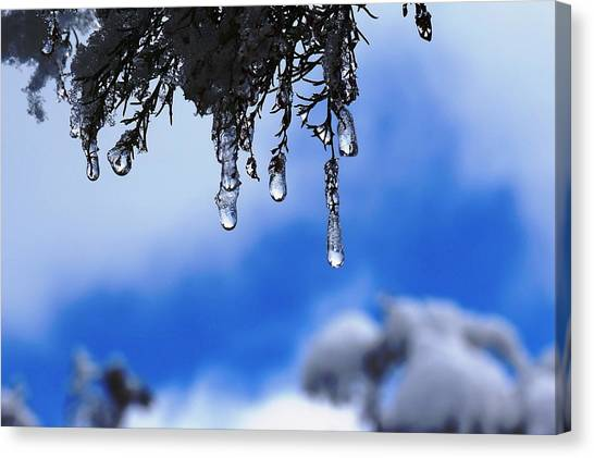 Ice Drops Canvas Print