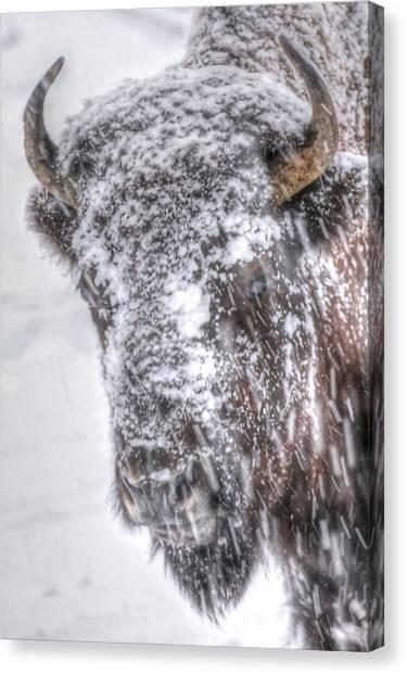 Ice Faced Canvas Print