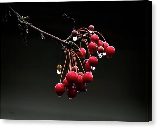Iced Crab Apples Canvas Print