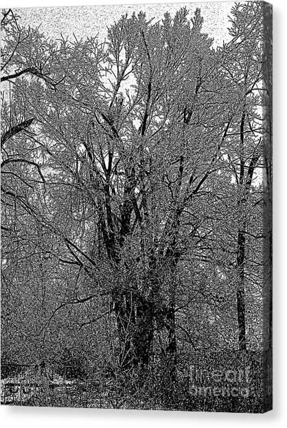 Iced Tree Canvas Print