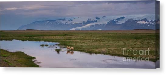 Iceland Sheep Reflections Panorama  Canvas Print