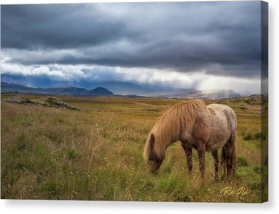 Canvas Print featuring the photograph Icelandic Pastoral With Iconic Horse by Rikk Flohr