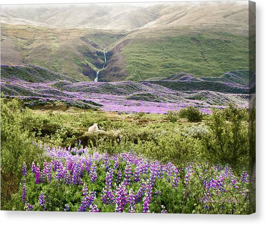 Icelandic Treasures Canvas Print