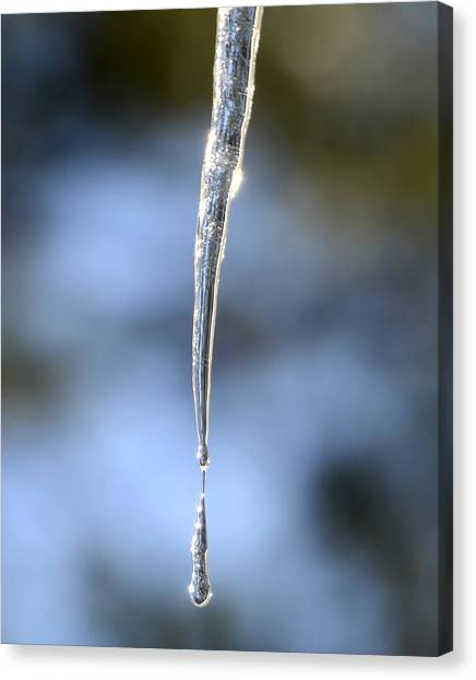 Icicles In Bloom Canvas Print