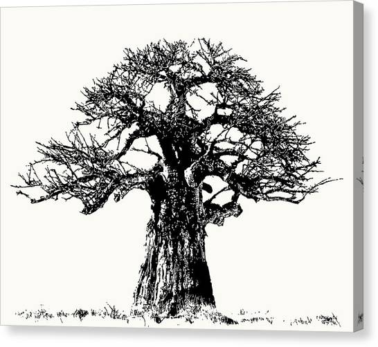 Iconic Baobab Tree In Black And White Canvas Print