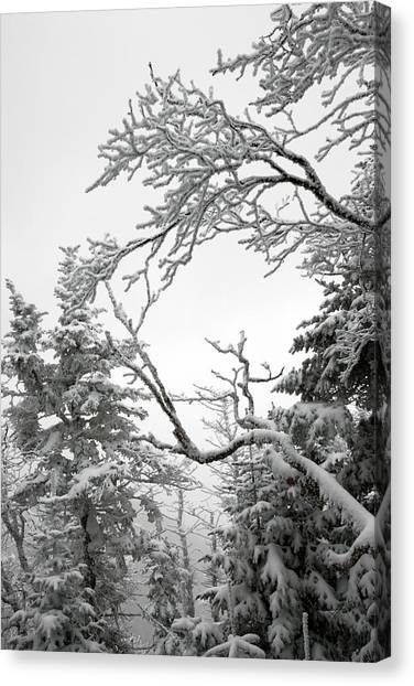 Icy Branches In The Adirondack Mountains Of New York Canvas Print by Brendan Reals