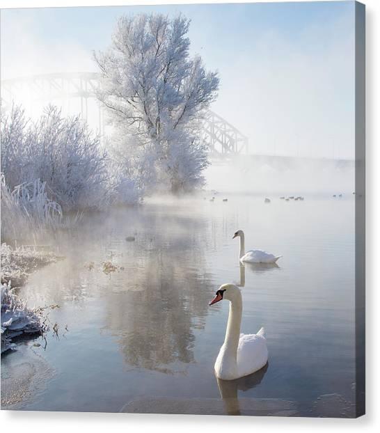 Wildlife Canvas Print - Icy Swan Lake by E.M. van Nuil