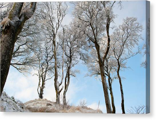 Icy Trees Canvas Print