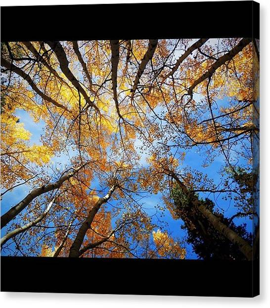 U2 Canvas Print - if You Want To Kiss The Sky You've by LeAnne Kartchner