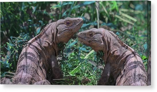 Iguanas Canvas Print - Iguanas  by Betsy Knapp
