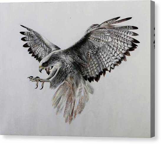 Hawks Canvas Print - Il Girifalco by Guido Borelli