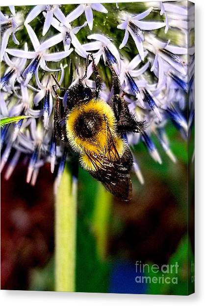 I'll Bee Back Canvas Print