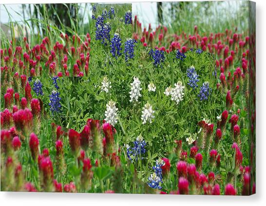 Illusions Of Texas In Red White Blue Canvas Print