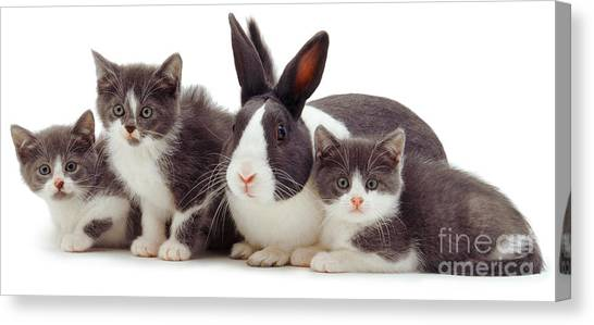 I'm Bun Of The Family Canvas Print