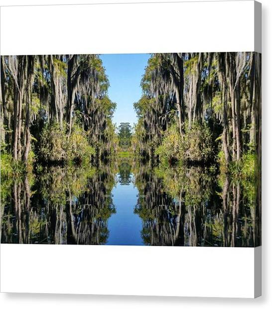 Okefenokee Canvas Print - I'm Having Fun Again With The Mirror by Karen Breeze