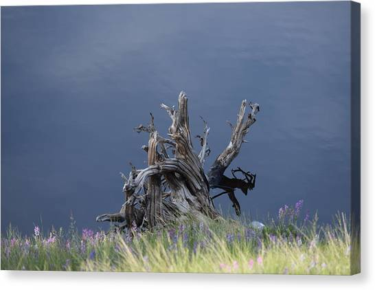 Stump Chambers Lake Hwy 14 Co Canvas Print