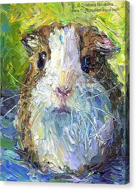 Colorful Canvas Print - Impasto Impressionistic  Guinea Pig Art by Svetlana Novikova