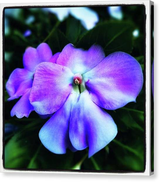 Canvas Print featuring the photograph Impatiens. Also Known As our Lady's by Mr Photojimsf