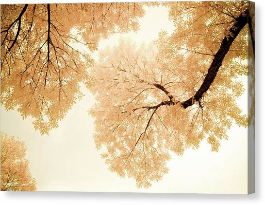 Impressions Of October Canvas Print
