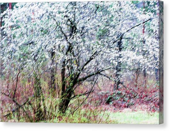 Impressionistic Canvas Print - From A Distance by DiFigiano Photography