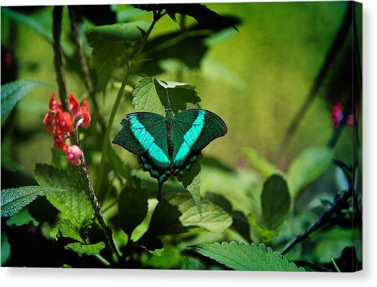 In A Butterfly World Canvas Print