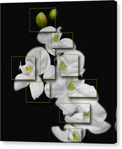 In And Out Of Focus 2 Canvas Print by Cecil Fuselier