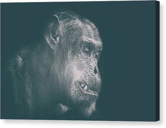 Orangutans Canvas Print - In Deep Thought by Martin Newman