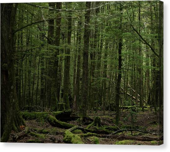 In Fangorn Forest Canvas Print