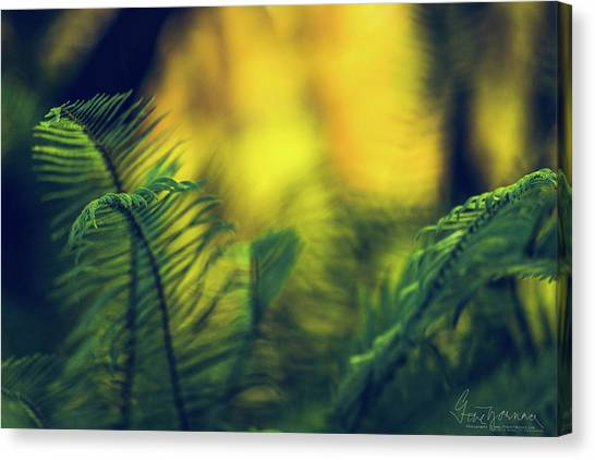 Canvas Print featuring the photograph In-fern-o by Gene Garnace