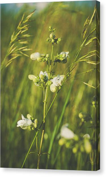 Canvas Print featuring the photograph In Fields Of Gold by Christi Kraft