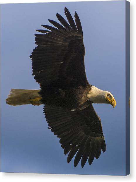 Canvas Print featuring the photograph In Flight by Gary Lengyel