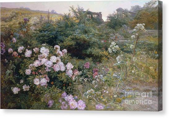 Rose In Bloom Canvas Print - In Full Bloom  by Henry Arthur Bonnefoy