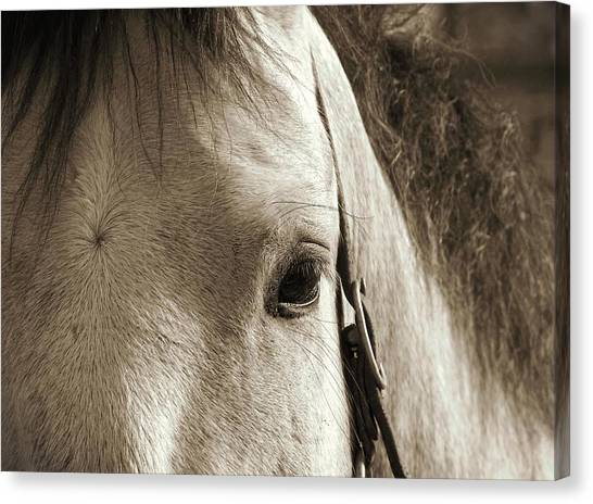 In German Pferd Canvas Print by JAMART Photography
