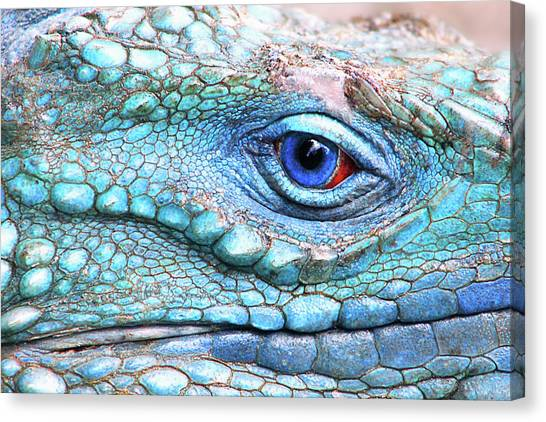 Iguanas Canvas Print - In His Eye by Iryna Goodall