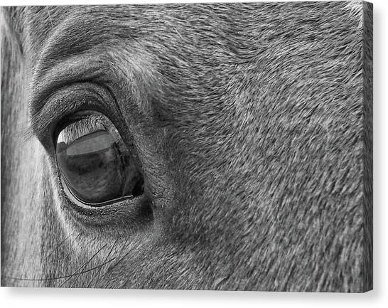 In Italian Cavallo View Canvas Print by JAMART Photography