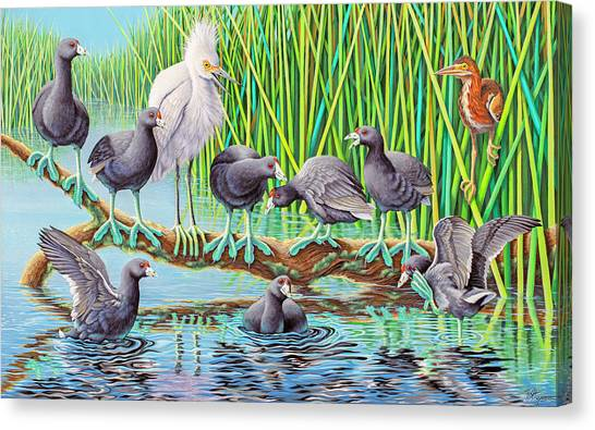 in Kahoots with Coots Canvas Print