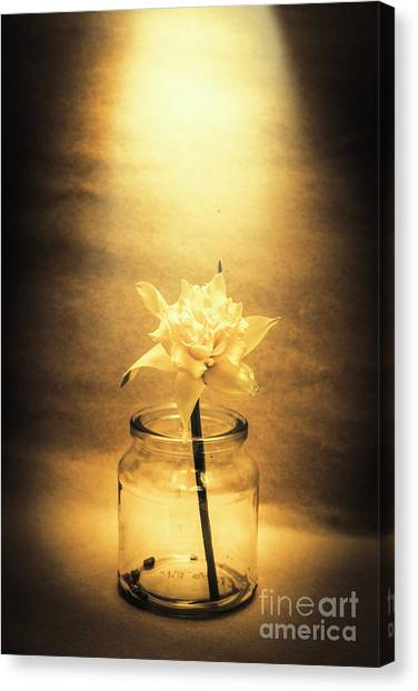 Daffodils Canvas Print - In Light Of Nostalgia by Jorgo Photography - Wall Art Gallery