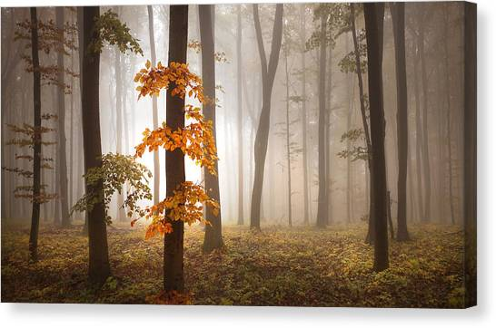 Foggy Forests Canvas Print - In November Light by Franz Schumacher