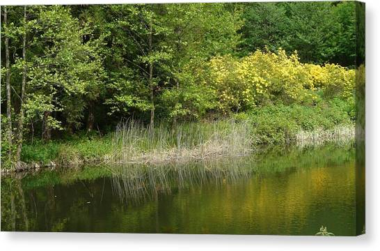 In Peace With Nature Canvas Print by Attila Balazs