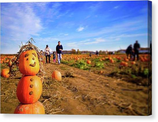 Pumpkin Patch Canvas Print - In Richmond County Farm - Pumpkin Patch by Yuta Koike