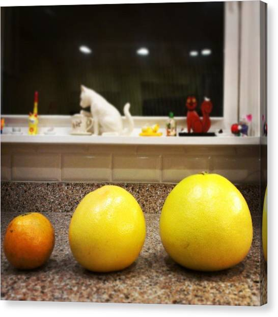 Grapefruits Canvas Print - In #size Order #pummelo #grapefruit And by Osiris Rosa