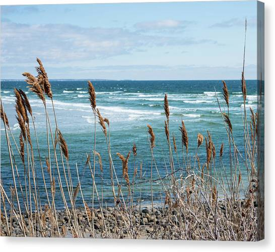 In The Breeze Canvas Print