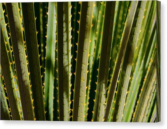 In The Cactaceae Weeds Canvas Print