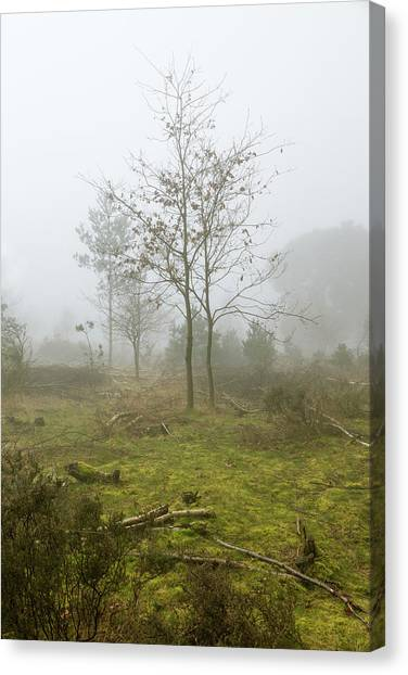 Sherwood Forest Canvas Print - In The Clear by Chris Dale