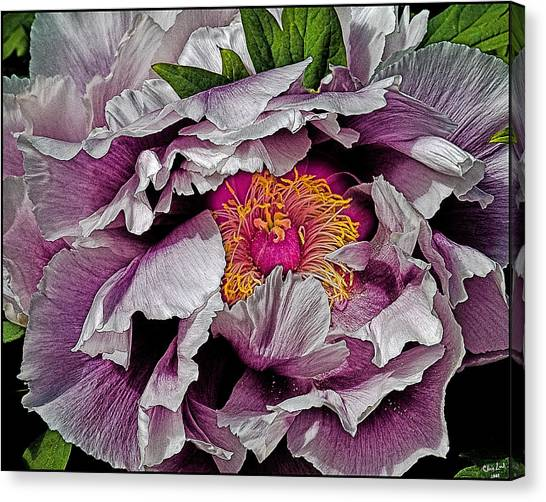 In The Eye Of The Peony Canvas Print