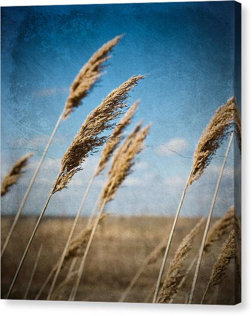 In The Field Canvas Print by Michel Filion
