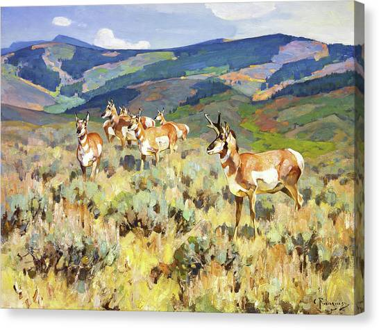 Goats Canvas Print - In The Foothills - Antelope by Rungius Carl